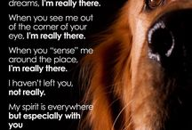 Quotes for rainbow dogs