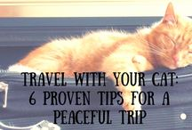 Travel + Vacation with Pets / A collection of resources and hacks for traveling and vacationing with cats and dogs.