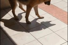 Silly Dogs / These Dogs Aren't The Smartest In The World, But They're Definitely Hilarious