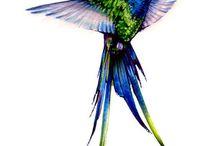 Desenhos e fotos de pássaros, animais e flores