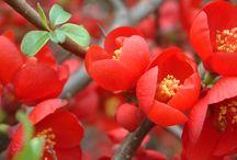 Janvier - Des fleurs, une saison