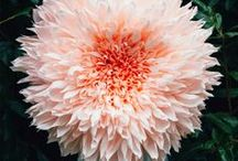 Kwiaty xxl