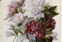 REDOUTE! (en andere) / Schilder , met uiterste precisie, prachtige bloemen en meer