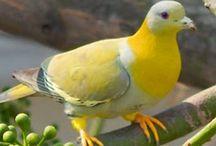 Pájaros / Del mundo