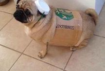 Funny pug / I have a pug and I found this online and I thought that it was really funny