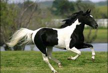 Horse Trailer Decal