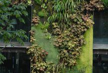 vertykalne ogrody