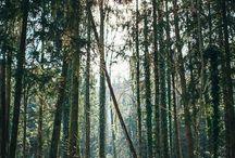 Family forest shoot