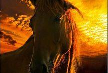 Horses  / by Carol Wilson