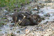 Oasi di natura / Flora e fauna della nostra terra www.tenutaneri.com