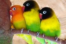birds / by Joanna Boomer