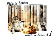 About Friends Mood - Special Cats -