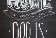 Dog Pinteres FCD