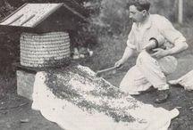 pszczoły stare fotografie