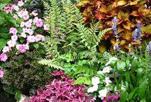 Exterior Plantings