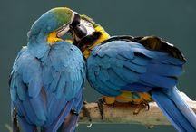 Parrots / by Ursie Lucas