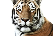 WWF Together / Experience the world's most amazing animals in one app — together. Download our app: https://itunes.apple.com/us/app/wwf-together/id581920331