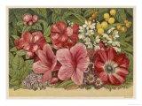 vintage botanicals / by Jolie Blue