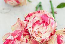 Flowers / by Jessica Cornman