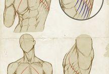 anatomia desenho