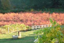 Local Washington Farms