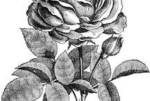 illustrazioni floreali