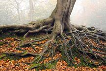 Bäume und Hände