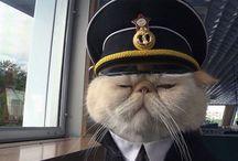 cat! cat!! cat!!!