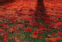 Is the autumn in zakopane the most beautiful one? / הוא כאן רשמית. לכבודו. סתיו  2016.