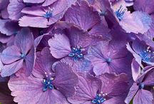 Flowers | Purple / Flowers | Purple