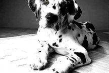 Pups & Kitties / by Pamela Horowitz