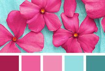 colors inspiration