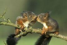 Cute!! / by Jillian Manzanares