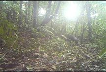 Hidden Camera / Video from our hidden camera in the middle of the lush forest near to Rincon de la Vieja Volcano.