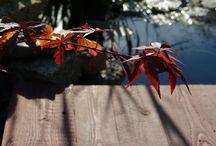 Garden autumn / Jesień to czas przygotowania się przyrody do zimowego spoczynku - czas płomiennych kolorów i pięknego światła, czas leniwych ognisk, czas zbiorów naszych plonów i czas ostatnich kwiatów.