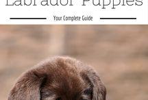 Advice for my new baby girl Tasha ( Black Labrador)