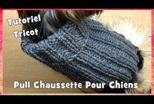 tricots pour petits chiens