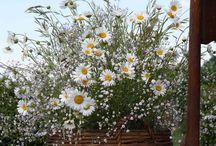cesti particolari  di fiori