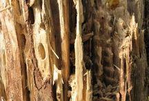 Termite Damage Dallas Fort Worth