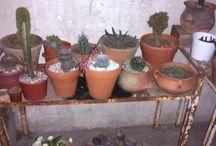cactus de Gise y algunos que me gustan