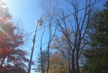 Tree Trimming / by North American Tree Service