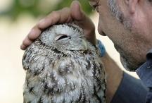 Beautiful: Owls / by Sebas An