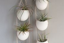 air plants for you / Tillandsias lovers and bromeliads