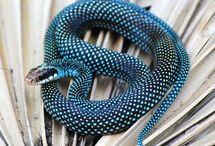 Kígyók