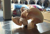 shiitake.funghibio.org / Divulgare le proprietà terapeutiche e culinaria del fungo  ShiiTake  Bio, coltivandolo  e vendendolo direttamente  nei circuiti  di Sovranita alimentare #CampiAperti #Mercatoritrovato