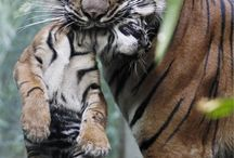 animal instinct / by Rita Ahadiana