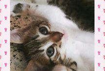 Chixe Chibi CAT PHOTOSHOOT