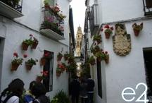 Festival of patios, Cordoba