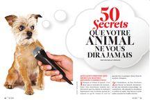 Les secrets de vos chiens et chats / Savez-vous ce qui se passe vraiment dans la tête de votre animal domestique?  Voici quelques pistes (et astuces) pour mieux le comprendre!  [Extraits issus de notre dossier de mars 2015]
