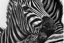 Animals / Animals